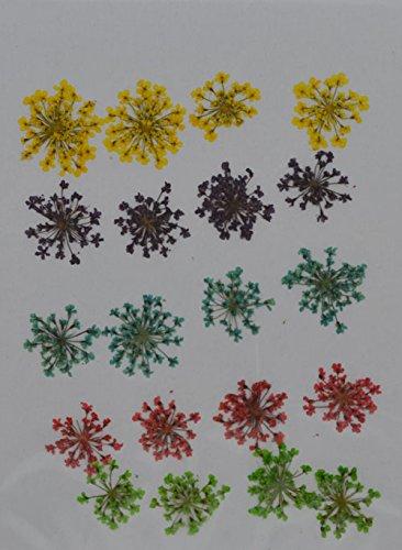 HANDI-KAFU giallo viola verde rosso Queen anne' S Lace Real pressato fiori secchi