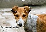Straßenhunde (Wandkalender 2020 DIN A4 quer)