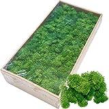 Cratone Musgo Artificial Decoración Plantas Artificiales en Pascua Decoración Navideña Maquetas Verde Mezcla de Musgo Conservado 500g