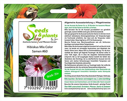 Stk - 25x Riesen Hibiskus Mix Color Blumen Pflanzen - Samen #60 - Seeds Plants Shop Samenbank Pfullingen Patrik Ipsa