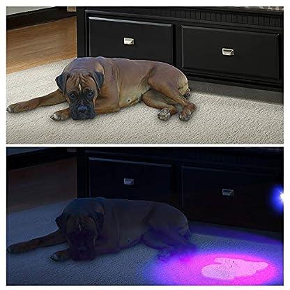 LEDGLE LED UV Flashlight UV Beast Pet Urine Finder Stain Detector Black Lights Torch, 100 LED Beads, with Lanyard 3