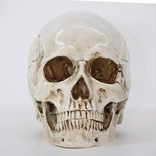 LBSST Ornament Handicrafts Halloween Decoration Resin Skull Ornaments Medical Skull Specimen Creative Props