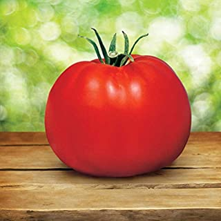 park's whopper tomato plants