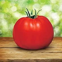 Park Seed Park's Whopper CR Improved Hybrid Tomato Seeds