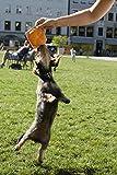 Hundespielzeug Quietsch-Leberkäs-Semmel zum Quietschen und Spielen - 5