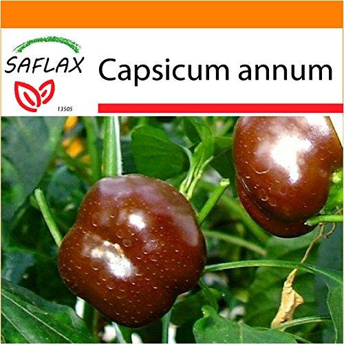 SAFLAX - Jardin dans le sac - Paprika - Sweet Chocolate X - 10 graines - Capsicum annum