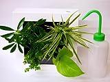 土の代わりにサントリーが独自に開発した画期的な新素材「パフカル」を使用しています。 お手入れは簡単、1週間に1~3回、付属の給水ボトルでフレーム上部の給水口から水を入れるだけ、のびてくる植物は剪定、1か月に1回程度液肥をあげるとさらに元気になります。 どんなインテリアにもなじむ定番の人気色、ホワイトフレーム。シンプルな緑の葉で構成されています。清潔感のある爽やかなコンビネーションが、お部屋を明るく演出します。 植栽パターンはあくまでイメージです。季節や育成状況によって現物と異なる場合があります。...