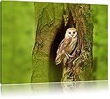 Pixxprint Schleiereule Baumhöhle als Leinwandbild | Größe: 60x40 cm | Wandbild | Kunstdruck | fertig bespannt