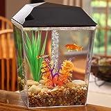 Aqua Culture 1 Gallon Aquarium Tank Starter Kit