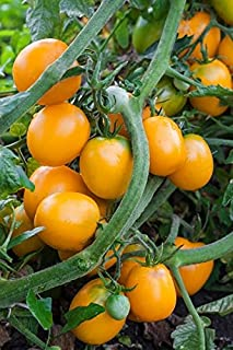 Tomato Akron - orange-red variety for greenhouse and tunnel cultivation - seeds