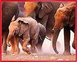 1art1 Elefantes Póster Impresión Artística con Marco (Plástico) - Rebaño De Elefantes, Namibia (50 x 40cm)