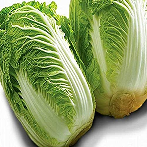 【産地厳選】 大玉 白菜 1箱 6玉入り約15kg