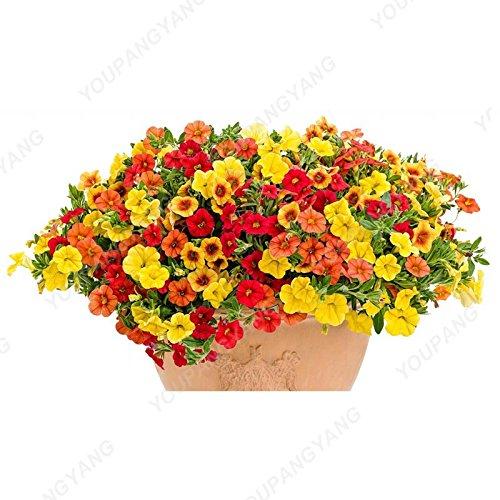 200pcs Bonsai couleurs mélangées Graines Petunia Belle Graines de fleurs Jardin Plante Pétunia Graine Balcon cadeau rare Décoration Vert