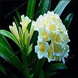 SONIRY 5PCS Camelia Flor Bonsai Bonsai de Bricolaje en...