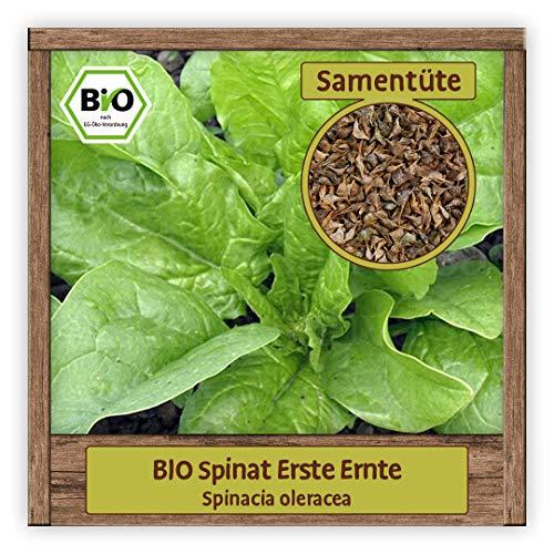 BIO Spinat Samen ERSTE ERNTE Blattspinat Salatsamen Gemüsesamen