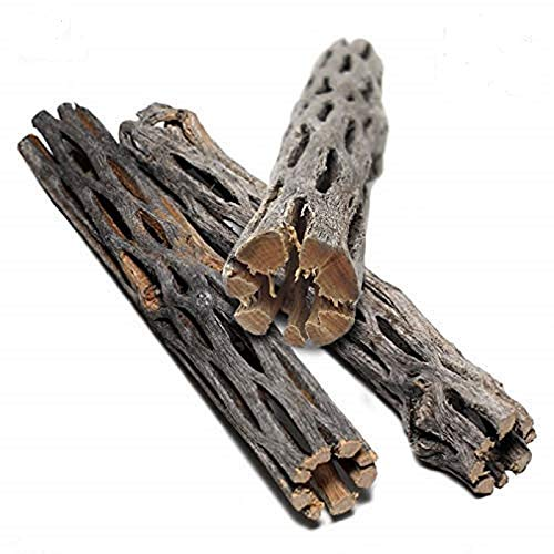 SunGrow Natural Cholla Wood, 5 Inches, Dried Husk for Playing and Hiding, for Chewing and Additional Nutrition, Guaranteed Organic, Provides Food, Aquarium Decorative, Pet-Safe, 3 Pack