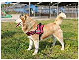 Red Padded Service Dog Harness W/handle (Small Chest measurement is 23-29 inches)