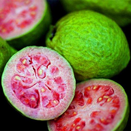 30 pcs/sac Goyave Graines délicieux Tropical graines de fruits en pot plantes non transgéniques bonsaï arbres fruitiers pour plantes de jardin à domicile 6
