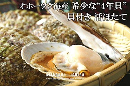 【北海道オホーツク海産 貝付き活ほたて 希少な4年貝 大・中サイズ混合150g〜200g前後】テレビ朝日 『極上!旅のススメ』 でも紹介された、北海道常呂町の貝付き活ほたて。流氷がもたらす豊富なミネラルをたっぷり取り込んで育った上質な逸品。時にはギフトに、
