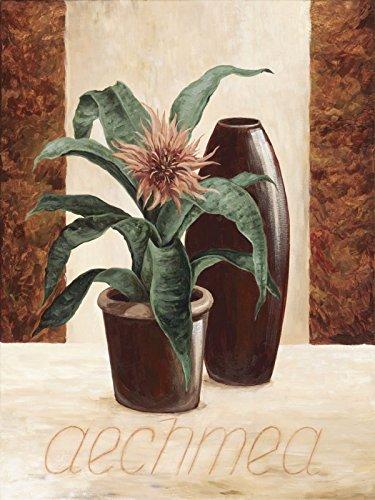 Artland Original Ölgemälde Unikat auf Leinwand von Hand gemalt auf Holz-Rahmen gespannt A. S. Aechmea - Lanzenrosette Botanik Pflanzen Topfpflanze Malerei Creme 80 x 60 x 2,8 cm A0KN