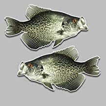 Black Crappie Fish Realistic Vinyl Decals 5.5