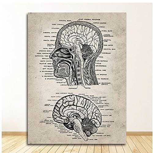 DLFALG Vintage cabeza humana y cerebro anatomía neurociencia cartel médico lienzo pintura clínica pared arte imagen impresión médico oficina decoración-42x60cm sin marco