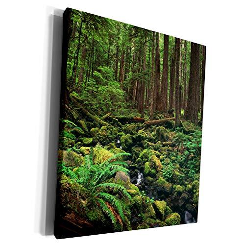 3dRose Danita Delimont - Forests - Olympic National Park forest, Washington, USA - US48 SWE0092 - Stuart Westmorland - Museum Grade Canvas Wrap (cw_148578_1)