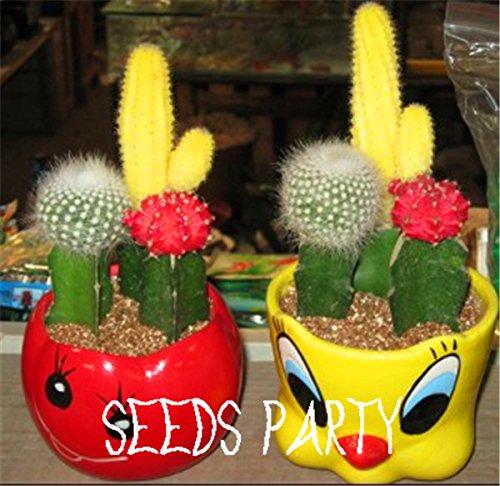 Stevia / sac 100 graines, Stevia Herb Seeds, substitut naturel du sucre Herb Seeds bonsaï maison plante jardin