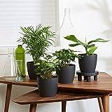 4er Set'Fresh' | Tropische Zimmerpflanzen Set | Vier Grünpflanzen mit Topf | Elho Übertopf | Höhe 25-30 cm | Topf-Ø 12 cm