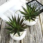 tuokorgreen small artificial plants in ceramic pots, faux greenery 2 pcs set 3.5″ x 6.7″(d x h)