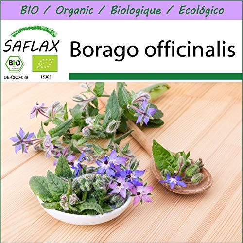 SAFLAX - BIO - Borragine - 40 semi - Borago officinalis