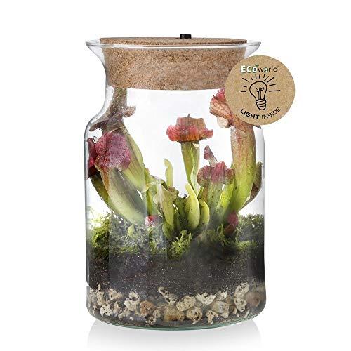 Ecoworld Corky Glass - Fleischfressende Pflanze im Geschlossen Ökosystem mit Beleuchtung - Ø 13 cm Höhe 20 cm