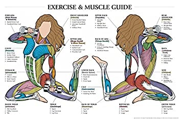 Fitnus Chart Series Exercise and Muscle Guide  Female  2005