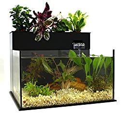 Brio 35 Aquaponics System Review Aquaponic With waterbox aquariums hanging out with richard gilliland and dean tapper ocean state aquatics osacorals. brio 35 aquaponics system review