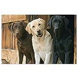 Fußmatte mit robuster PVC-Rückseite, Hundemotiv mit drei Ohren, rutschfest, für Eingangstür drinnen und draußen, 60 x 40 cm