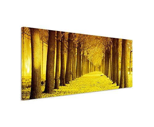 Sinus Art 150x50cm Wandbild – Panoramabild auf Leinwand Herbst Allee Gingkobäume