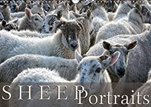 Sheep Portraits 2016: Discover 12 beautiful portraits of sheep in the countryside (Calvendo Animals)