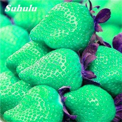 Big Promotion! 1000 Pcs Four Seasons en pot Graines Strawberry Super Sweet Seeds fruits Bonsai plantes Semences Maison et Jardin 13