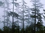 The Poster Corp Panoramic Images – Silhouette of trees