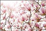 Muralo Fototapete Bunte Magnolienblüten 180x270 Vlies modern Natur Dekoration - 396358774