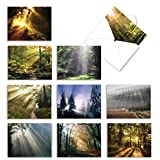 The Best Card Company - Box of 10 Beautiful Landscape Note Cards (4 x 5.12 Inch) - Blank Cards of Nature, Wilderness, Trails - Shining Through M1735BN