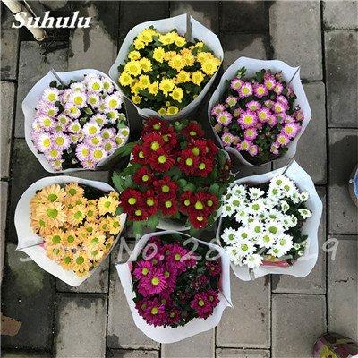120 pcs graines graines de fleurs Daisy strawberry marguerite, fleurs de saison graines chrysanthème, Bonasi beau balcon fleuri coloré 12