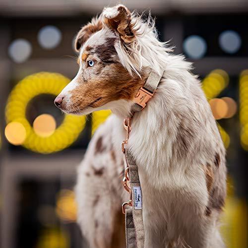 Freudentier Hundeleine (2m) + Hundehalsband im Set | Außergewöhnlich Elegant & Verstellbar - 5