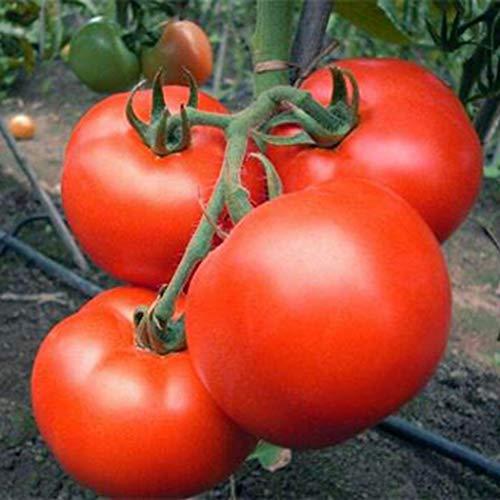 Tiowea 20 stuks tuin balkon mooie groenteplanten meerdere tomaten zaden groenten Medium type 4