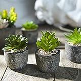 Zoom IMG-1 jobary set di 5 piante