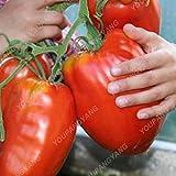 200Seeds 100% auténticos Semillas gigante Sames Graines de tomates frescos en raras Bonsai para jardín Plantación de envío púrpura