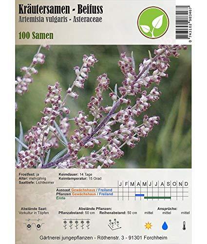 Semi di erbe - Artemisia/Artemisia vulgaris 100 Semi