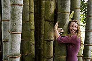 moso bamboo for sale