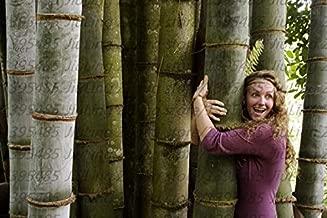 bamboo seeds india
