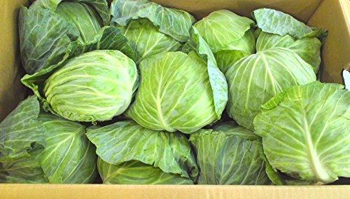 広島県産 キャベツ 10キロ 新鮮野菜 野菜 農家直